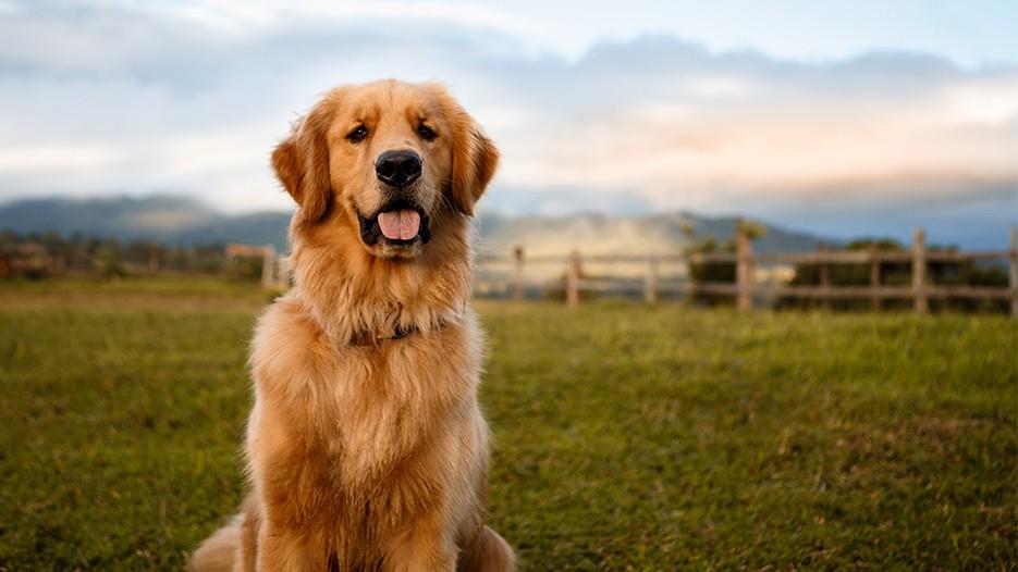 farmerdog
